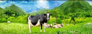 Оборудование для молочных ферм от компании ТАГРИС