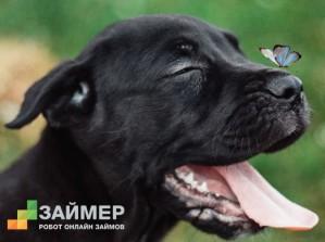«Займер» определил победителей фотоконкурса домашних питомцев