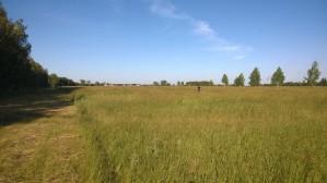 Купить землю сельхозназначения: полный цикл услуг от компании