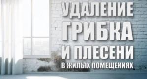 Удаление грибка и плесени в Киеве и области. Недорого, с гарантией